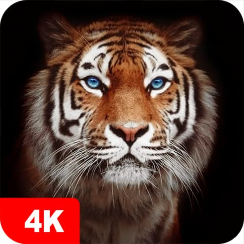 Tiger Wallpapers 4K & HD Backgrounds apps