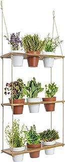 Best outdoor succulent shelf Reviews