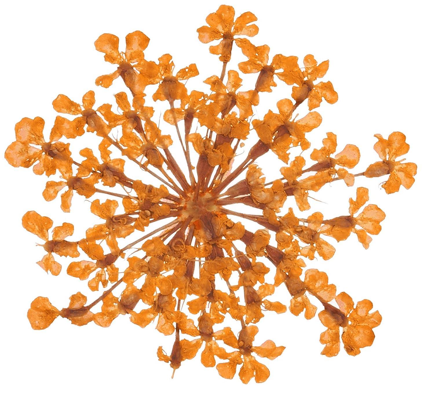 気楽なキャンパス妥協ベィビーズブレス BB-7 オレンジ 約10枚