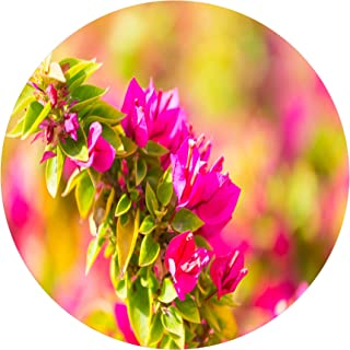 Designart Beautiful Pink Bougainvillea Flowers Floral Metal Wall Art- Disc of 23, 23X23-Disc of 23 inch