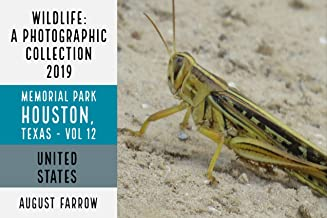 Wildlife: 19 Days in Memorial Park - 2019: A Photographic Collection, Vol. 12 (Wildlife: Memorial Park: Houston Texas)