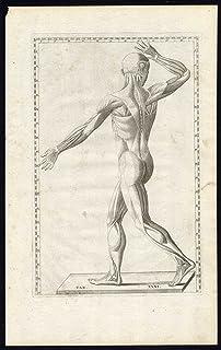 ThePrintsCollector Reproduction Antique-Anatomy-Muscles postérieure-Mâle-Pl 31–Albinus-Eustachius - 1761