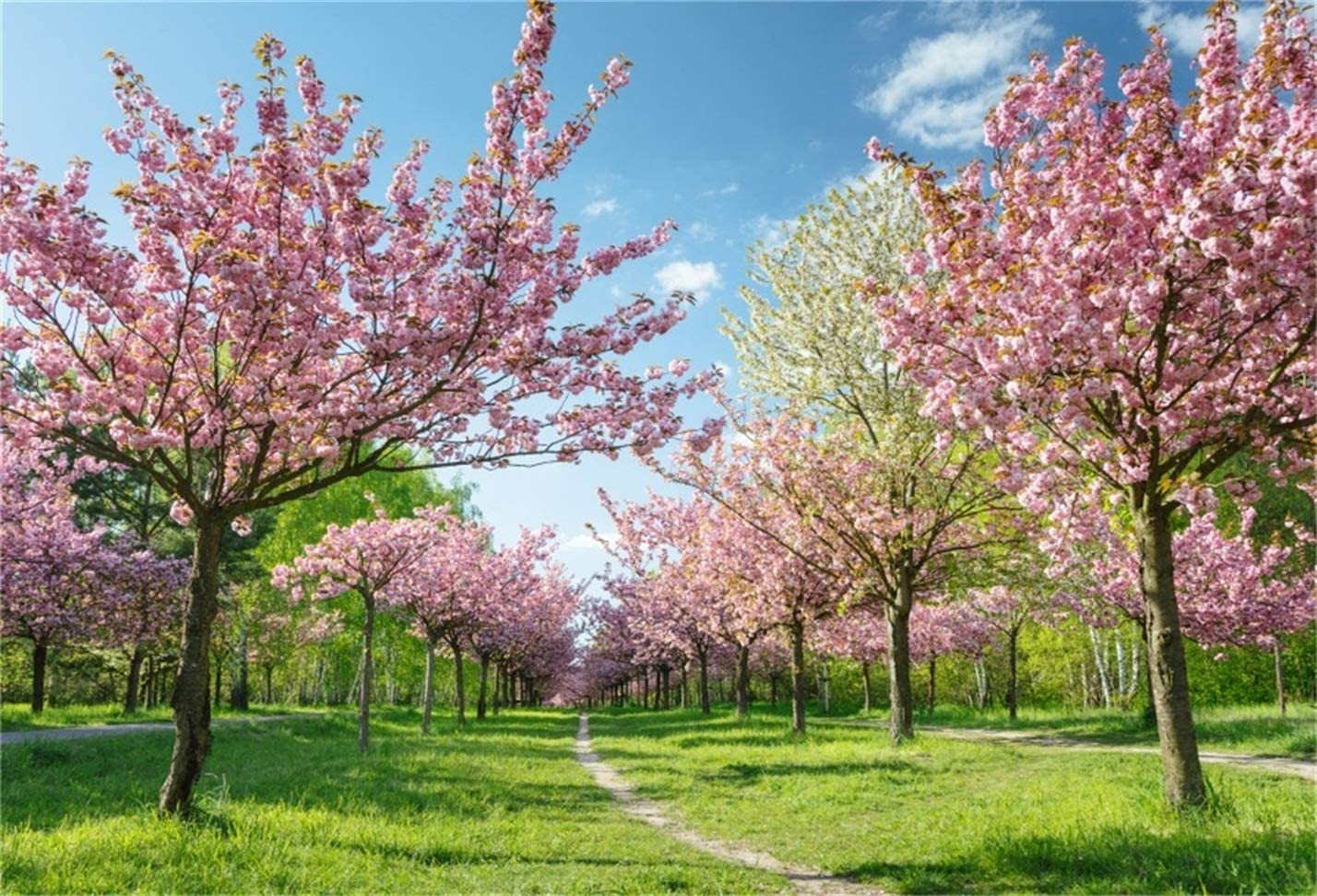 Dreamy Blossom Orchard Backdrop 9x6ft Photography Background Blue Sky Green Grass Rural Scenery Countryside Vacation Children Adult Portraits Shoot