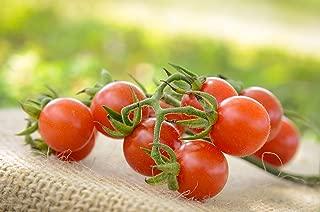 Matt's Wild Cherry Heirloom Cherry Tomato Premium Seed Packet