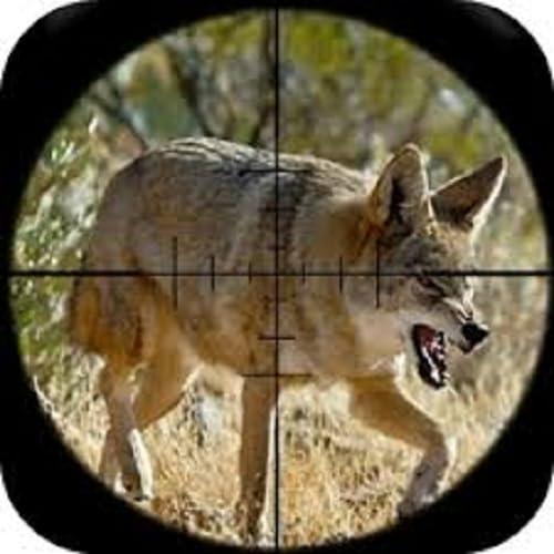 Coyote Calls