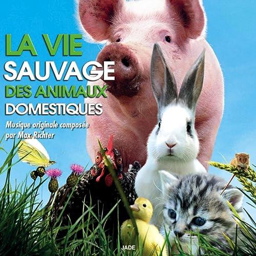 Album Wilde Album Vide Edibas Animaux et Nature Sauvage