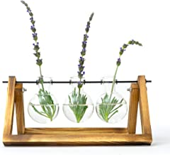 Desktop Indoor Plant Stand - Propagation Station with Hanging Glass Vases for Aesthetic Room Decor
