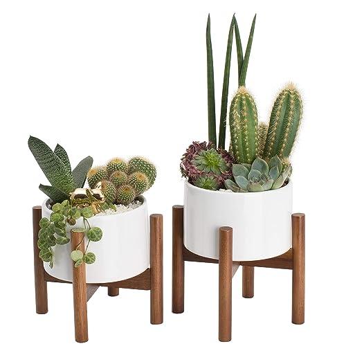 Tremendous Tabletop Planters Amazon Com Interior Design Ideas Apansoteloinfo