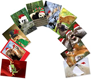 10 Boxed 'Christmas Creatures' Assorted Merry Christmas Cards With Envelopes - Featuring Variety of Cute Wild Animals in Santa Attire - A Happy Holidays and Seasons Greetings Gift A5636XSG-B1x10