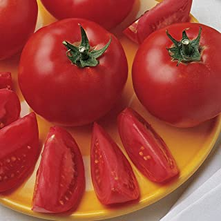 Burpee Bush Early Girl' Hybrid Tomato, 3 Live Plants | 2 1/2