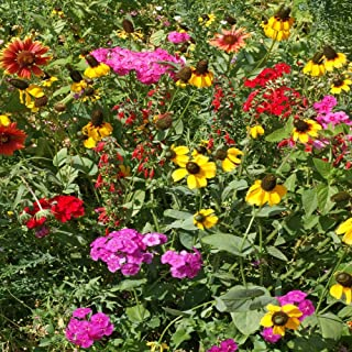 Outsidepride Southeast Wildflower Seed Mix - 1/4 LB