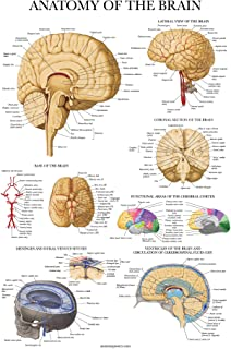 Sponsored Ad - Brain Anatomy Poster - Laminated - Anatomical Chart of The Human Brain