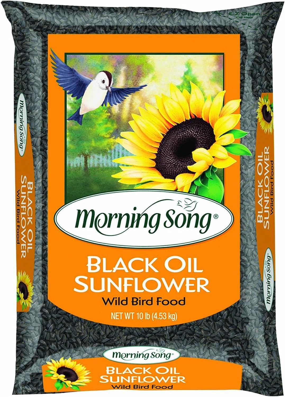 Morning Song 11996 Black Oil Sunflower Wild Bird Food, 10Pound