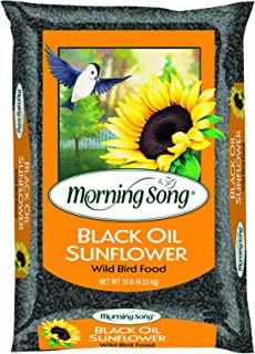 Morning Song 11996 Black Oil Sunflower Wild Bird Food, 10-Pound