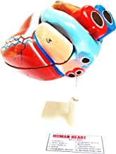 anand traders human heart 3D model with disectable parts
