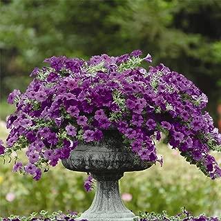 Best blue wave petunia plants Reviews