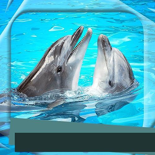 イルカの写真フレーム