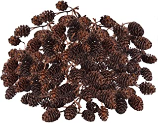 SunGrow Alder Cones for Betta Fish, 0.5-1 Inch, Promotes Breeding in Freshwater Tanks, Perfect for Both Big and Small Aqua...