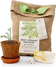 sympathy tree kit