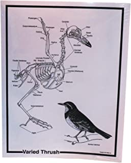 Pellets Inc., Skeleton and Food Web Diagrams Set, (83182) [並行輸入品]