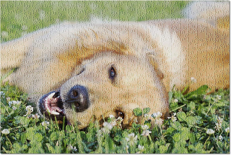 Golden Max 68% OFF Retriever on Clover Photography Deluxe A-90767 50 90767 Premium