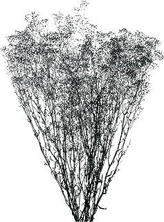 大地農園 プリザーブドフラワー ソフトミニカスミ草(22g入り) DO000010-895