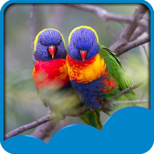 Papéis de Parede de Amor Aves Live