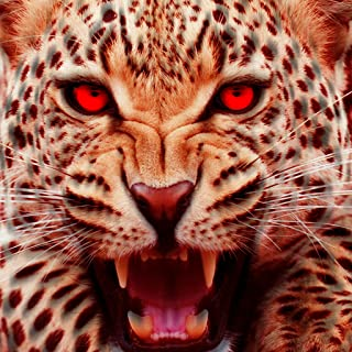 Life Of Cheetah