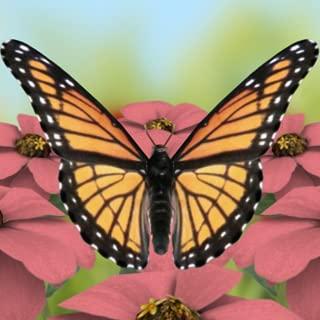 Beautiful Butterflies Live Wallpaper Free