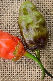Bubblegum MAMP 7 Pot Purple Scorpion Pepper Hot Pepper Premium Seed Packet + More