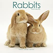Rabbit Calendar - Cute Animal Calendar - Calendars 2017 - 2018 Wall Calendars - Animal Calendar - Rabbits 16 Month Wall Calendar by Avonside