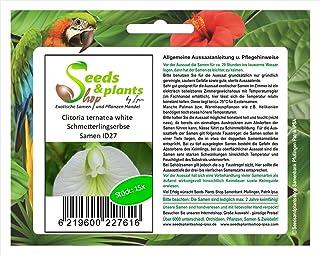15 Clitoria ternatea blanco semillas jardín de arbusto del guisante de mariposa ID27
