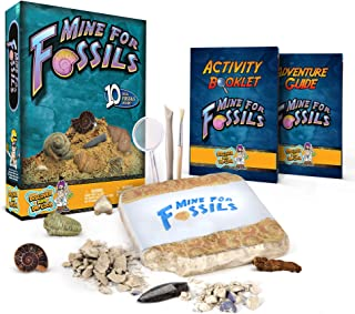 Mine for Fossils Science Kit Dig Up 10 Prehistoric Fossils!