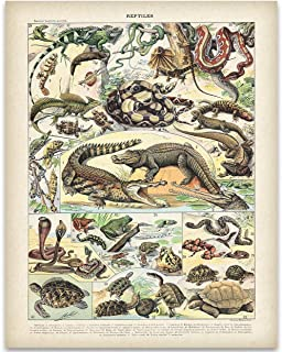 Old Fashioned French Reptile Illustration - 11x14 Unframed Art Print - Great Vintage Wall Decor