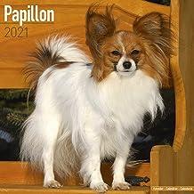 Papillon Calendar - Papillon Dog - Dog Breed Calendars - 2020 - 2021 wall calendars - 16 Month by Avonside