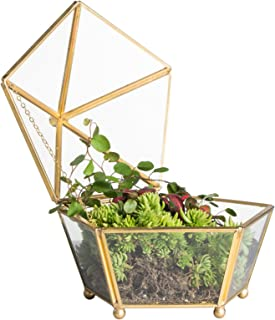 NCYP Vintage Decorative Jewelry Chest Geometric Terrarium Window Box Storage Display Case Pentagon Shape Clear Glass and Brass Tone Air Plant Planter Geo Metal Slanted Top Swing Lid