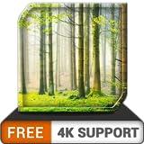 無料の緑の降雨HD-ストレスを克服するために雨の雰囲気をリラックス-調停と平和のための壁紙とテーマとしてのHDR 8k 4kテレビと火災機器のアプリ