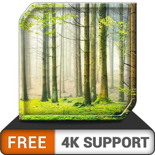 free green rainfall HD - entspannendes, regnerisches Ambiente zur Überwindung von Stress - eine App auf Ihrem HDR 8k 4k-Fernseher und Feuergeräten als Hintergrundbild und Thema für Vermittlung und Fri