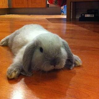 I has a floor Bunny Live WP