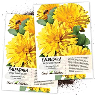 Seed Needs, Calendula Pacific Beauty Yellow (Calendula officinalis) Twin Pack of 500 Seeds Each