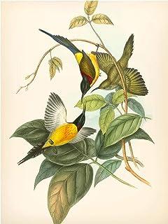 Bilderwelten Pizarra magnética - Vintage Illustration Tropical Birds IV 40x30cm