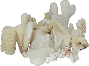 Best coral for crafts Reviews