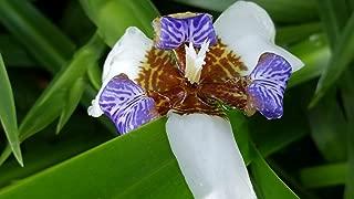 Best walking plant pot Reviews