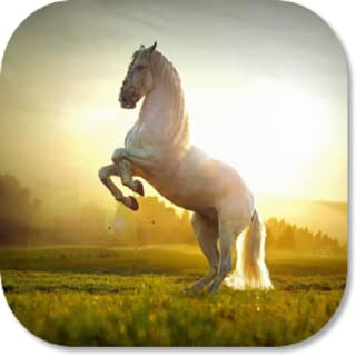 Horse Browser Games