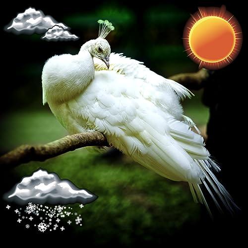 Reloj meteorológico de aves exóticas