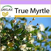 SAFLAX - True Myrtle - 30 Seeds - Myrtus communis