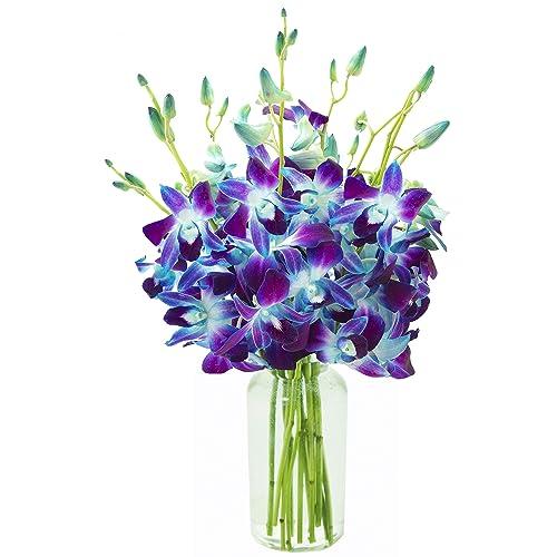 Blue Orchids Amazoncom