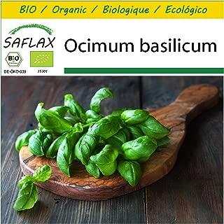 Albahaca Roja Ocimum basilicum 400 semillas SAFLAX Ecol/ógico