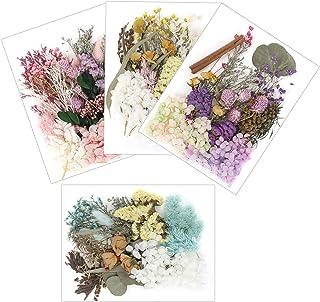 مجموعة جايوفمي من 4 عبوات من الزهور المجففة المضغوطة، والاوراق المجففة، مكونة من زهور اقحوان، وورد احمر، وزهور طبيعية متعد...