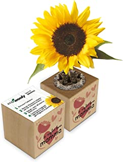 Eco-Woody   Regalo ecologico e sostenibile Festa della Mamma   Cubo di legno magnetico con semi di Girasole   Kit per la c...